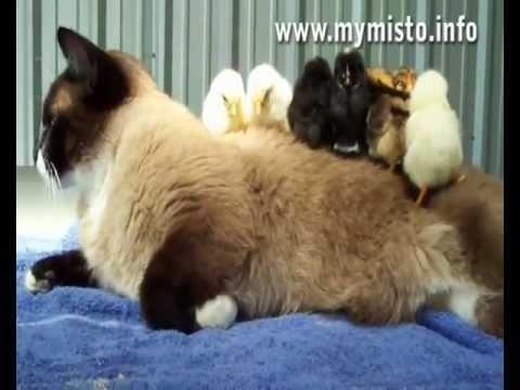 Смотреть смешное видео про кошек и собак и детей